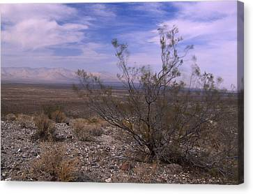 Lonely Places Canvas Print by Soli Deo Gloria Wilderness And Wildlife Photography