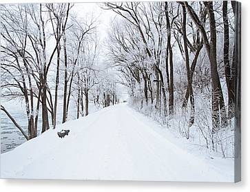 Lonely Snowy Road Canvas Print by  Newwwman