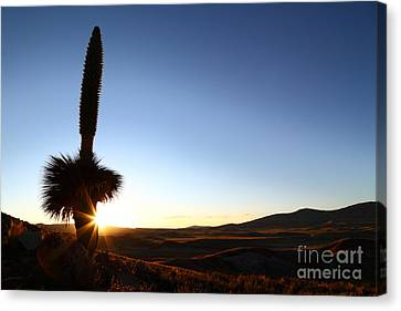 Lonely Sunset Sentinal Canvas Print by James Brunker