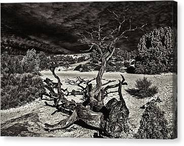 Lonely Tree #4  Canvas Print by Alex Galkin