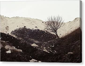 Terra Firma Canvas Print - Lonely Tree by Anton Popov