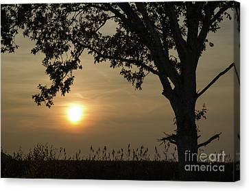 Lonely Tree At Sunset Canvas Print