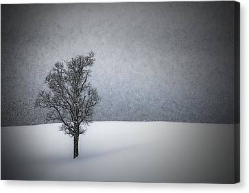 Mystical Landscape Canvas Print - Lonely Tree Idyllic Winterlandscape by Melanie Viola