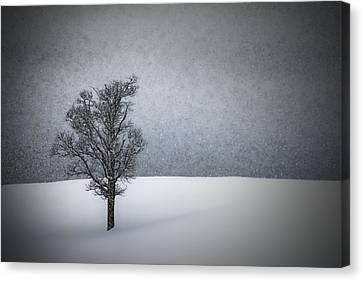 Lonely Tree Idyllic Winterlandscape Canvas Print by Melanie Viola