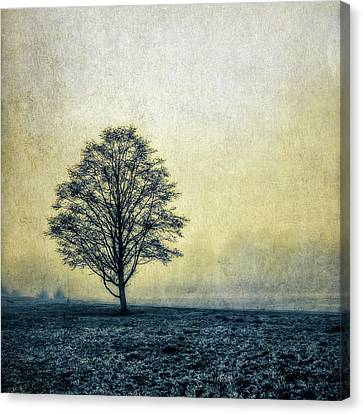 Canvas Print featuring the photograph Lonely Tree by Marion McCristall