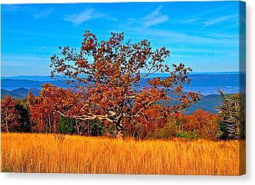 Lonely Tree Skyline Drive Va Canvas Print by The American Shutterbug Society