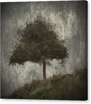 Lonely Tree Canvas Print by Stelios Kleanthous