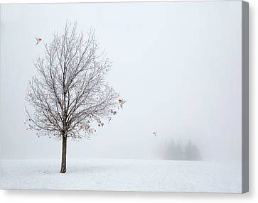 Lonely Winter As The Birds Return Canvas Print by Georgiana Romanovna