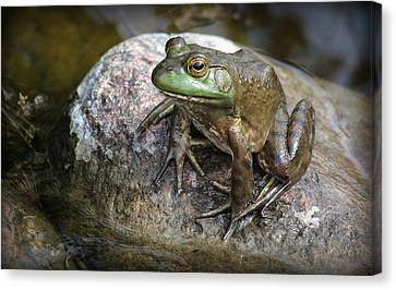 Lonesome Frog Canvas Print by Rosanne Jordan