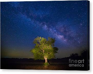 Milky Way Tree Canvas Print by Inge Johnsson