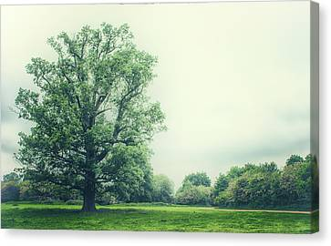 Out Of The Woods Canvas Print - Lonesome Tree by Martin Newman