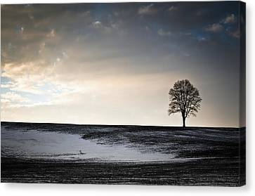 Lonesome Tree On A Hill IIi Canvas Print by David Sutton