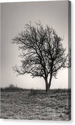 Lonesome Tree Canvas Print by Tamyra Ayles
