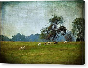 Country Scene Canvas Print - Long Ago And Far Away by Jan Amiss Photography
