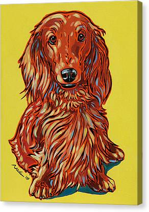 Long Haired Dachshund Canvas Print by Nadi Spencer