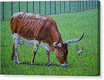 Long Horn Calf Canvas Print