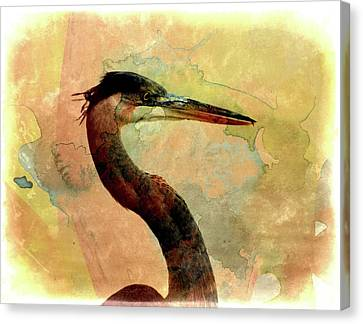Long Neck 2 Canvas Print