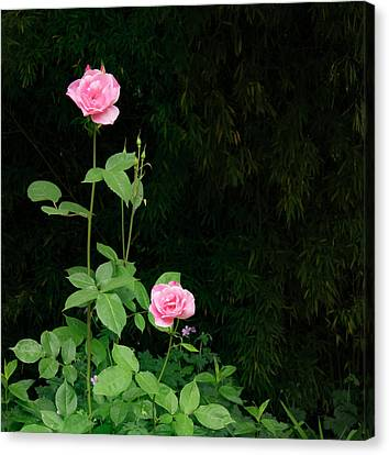 Canvas Print featuring the photograph Long Stemmed Rose by Jean Noren