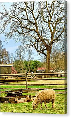 Long Street Farms Holmdel New Jersey Canvas Print by Geraldine Scull