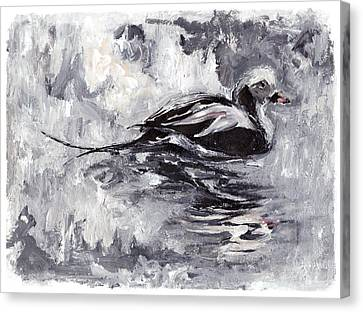Long-tailed Duck Canvas Print