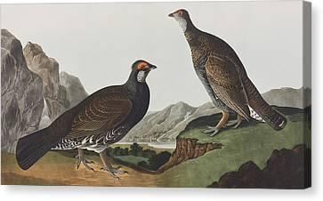 Long-tailed Or Dusky Grous Canvas Print by John James Audubon