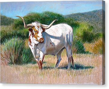 Canvas Print featuring the painting Longhorn Bull by Sue Halstenberg