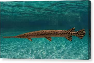 Sea Animals Canvas Print - Longnose Gar Fish by Art Spectrum