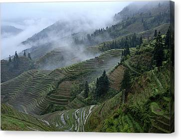 Longsheng Rice Terraces Canvas Print by Michele Burgess