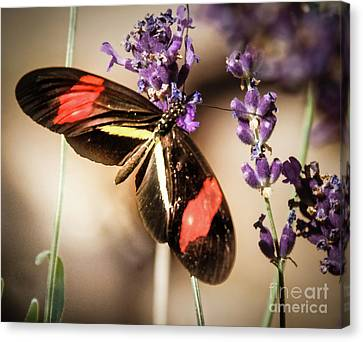 Longwing Butterfly Canvas Print