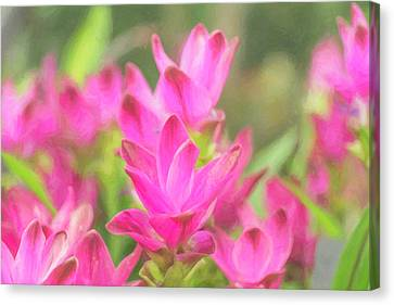 Flowerrs Canvas Print - Longwood Gardens by Jeff Oates Photography