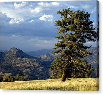 Lonly Tree Canvas Print by Marty Koch