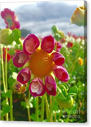 Look At Me Dahlia Canvas Print