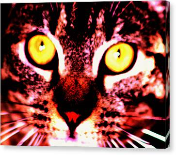 Look In To My Eyes Canvas Print by Nick Gustafson