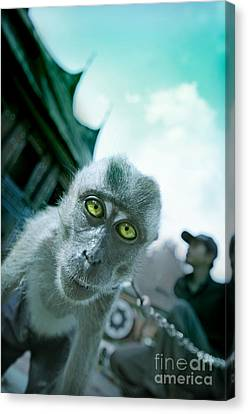 Look Into My Eyes Canvas Print by Charuhas Images