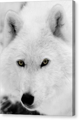 Look Into My Eyes Canvas Print by Larry Ricker
