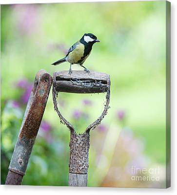 Titmouse Canvas Print - Look Out by Tim Gainey