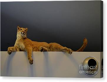 Canvas Print - Look Up - Beware The Mountain Lion by Mary Deal