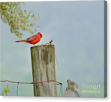 Look Whos Coming To Dinner Canvas Print