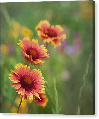 Canvas Print featuring the photograph Look...a Flower by John Crothers