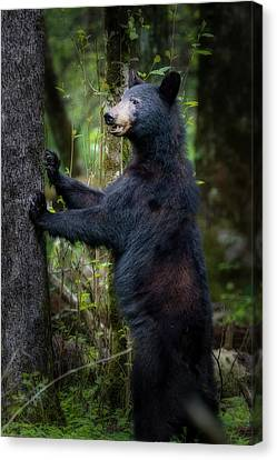 Canvas Print - Looking Ahead In The Woods by Dan Friend