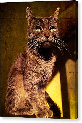 Looking At The Sun Canvas Print by Loriental Photography