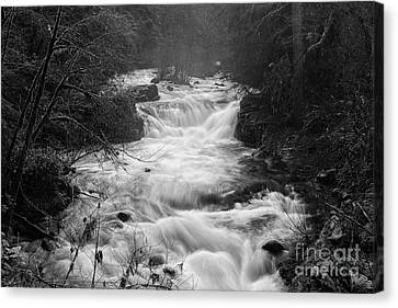 looking down the Creek Canvas Print by Masako Metz