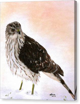 Raptor Canvas Print - Looking For Breakfast by Angela Davies