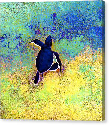 Turtle Shell Canvas Print - Freedom At Last by Stacey Chiew