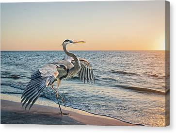 Looking For Supper Canvas Print by Brian Tarr