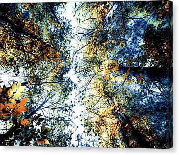 Looking For The Sky Canvas Print