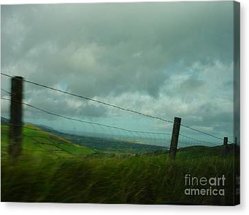 Looking For Tralee Canvas Print by PJ  Cloud