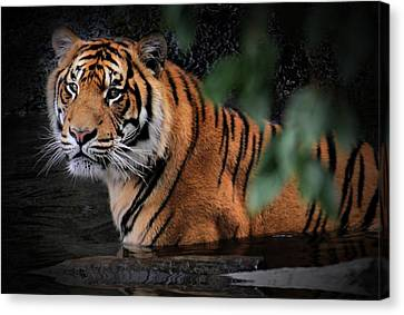 Looking Oh So Sweet Canvas Print