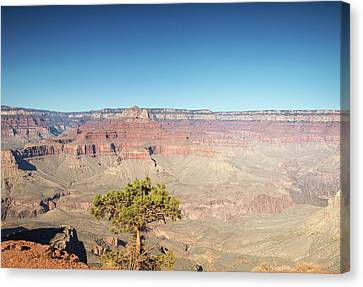 Looking Out Over The Canyon Canvas Print by Kunal Mehra