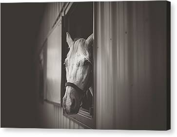 Breeder Canvas Print - Looking Out by Shane Holsclaw